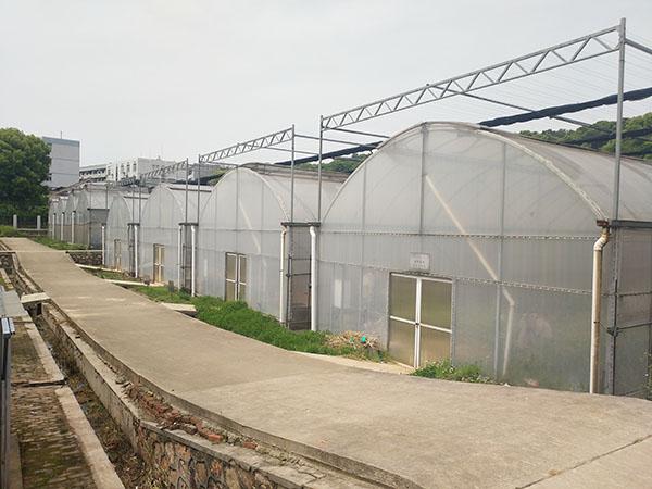 单栋温室大棚