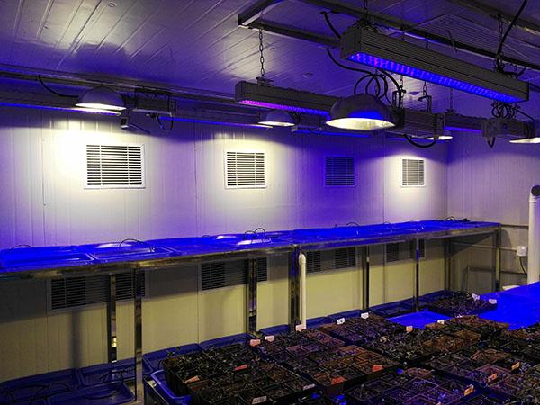 马铃薯蓝光组培室
