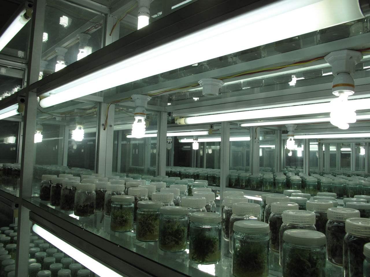 育苗组培室