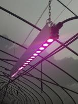 大功率LED植物生长灯
