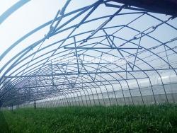 种植温室大棚